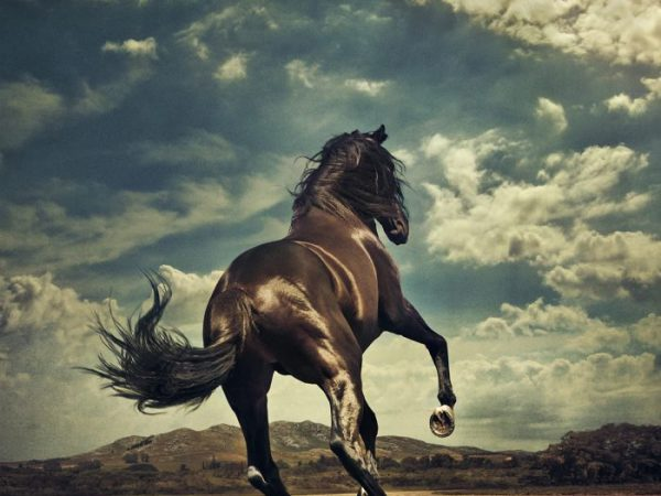 "Nytt Springsteen-album: ""Western Stars"""