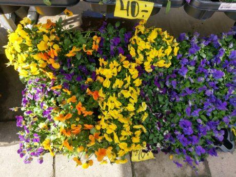 blommor htc 10